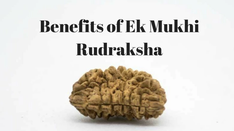 Find out how to benefit from Ek Mukhi Rudrakshas..